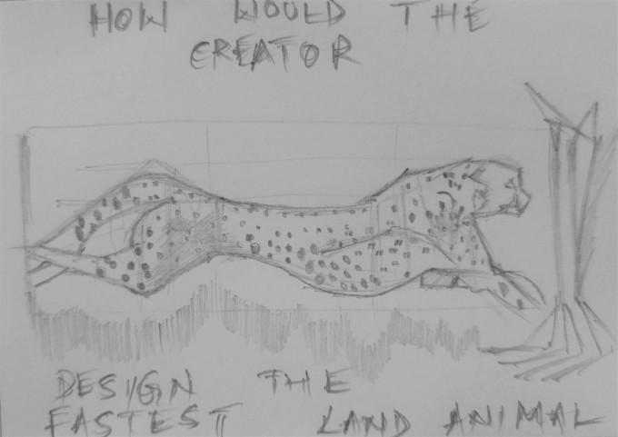 my cheetah.jpg